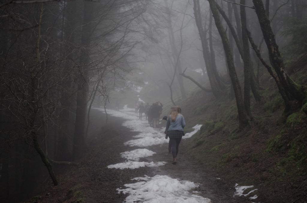 Students walking through the snowy woods