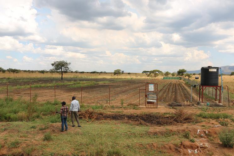 A farm in Uganda